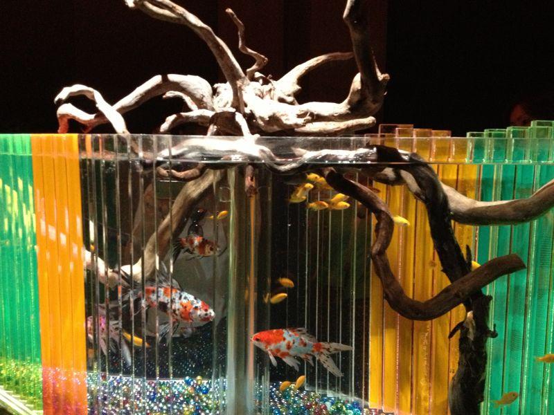 流木と金魚