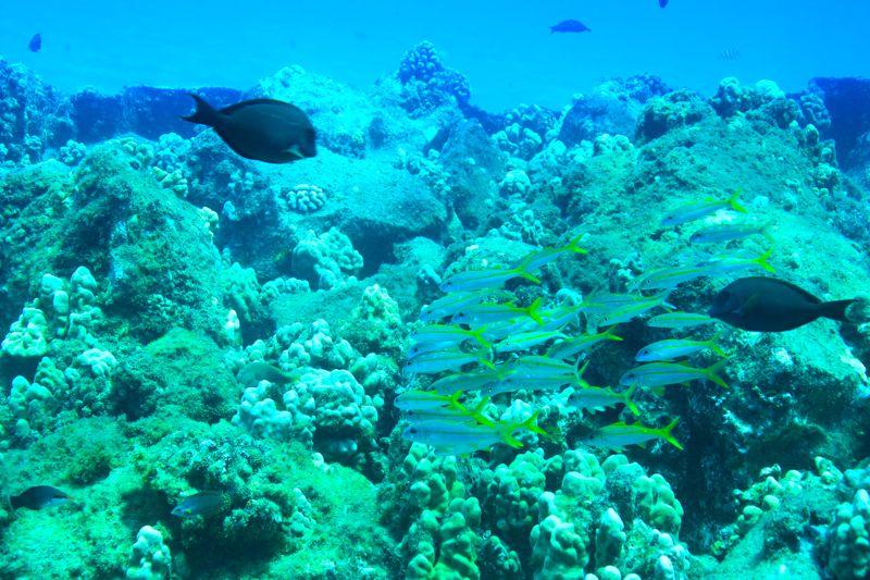 珊瑚とおさかな
