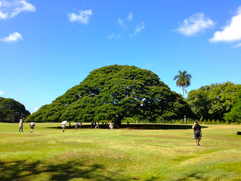 この木なんの木の木